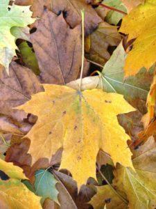 По мотивам АС. Осень