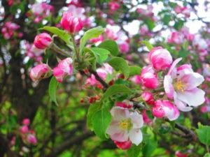 По мотивам АС. Скоро весна